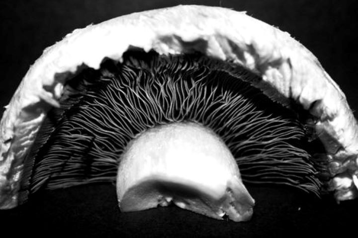 Weston photograph mushroom, feminist poetry, poems about trauma