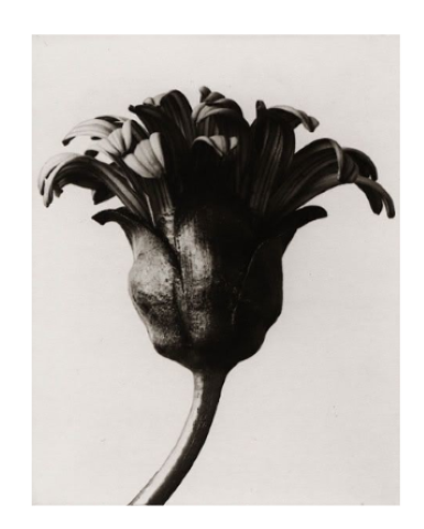 Weston photograph flower, feminist poetry, poems about trauma