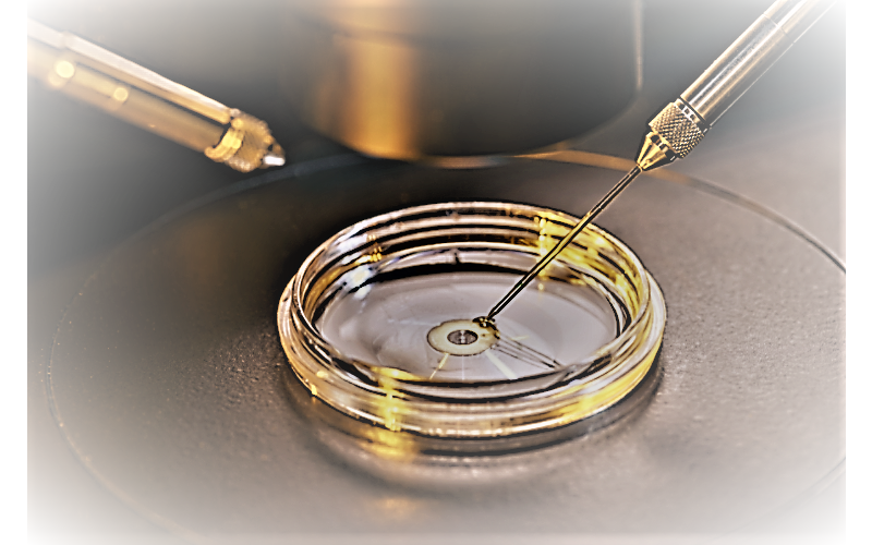 Photograph of needles and a petri dish. from: PWCD - queer reproductive rights